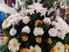 smútočná-väzba-a-kondolencia_15